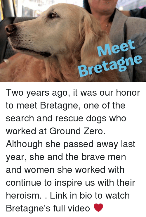 Dogs, Memes, and Zero: Meet  Bretagne Two years ago, it was our honor to meet Bretagne, one of the search and rescue dogs who worked at Ground Zero. Although she passed away last year, she and the brave men and women she worked with continue to inspire us with their heroism. . Link in bio to watch Bretagne's full video ❤️