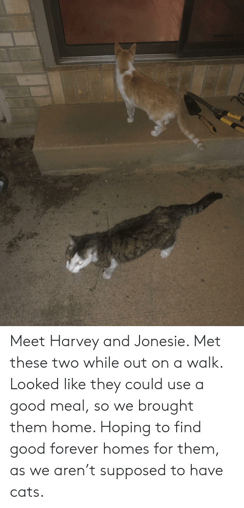 Cats, Forever, and Good: Meet Harvey and Jonesie. Met these two while out on a walk. Looked like they could use a good meal, so we brought them home. Hoping to find good forever homes for them, as we aren't supposed to have cats.