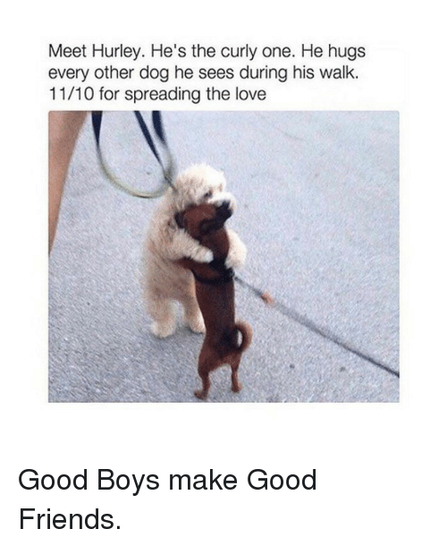 Friends, Love, and Good: Meet Hurley. He's the curly one. He hugs  every other dog he sees during his walk.  11/10 for spreading the love <p>Good Boys make Good Friends.</p>