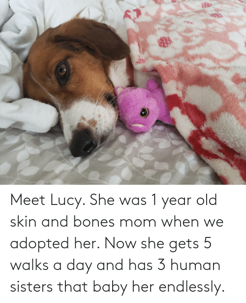 endlessly: Meet Lucy. She was 1 year old skin and bones mom when we adopted her. Now she gets 5 walks a day and has 3 human sisters that baby her endlessly.