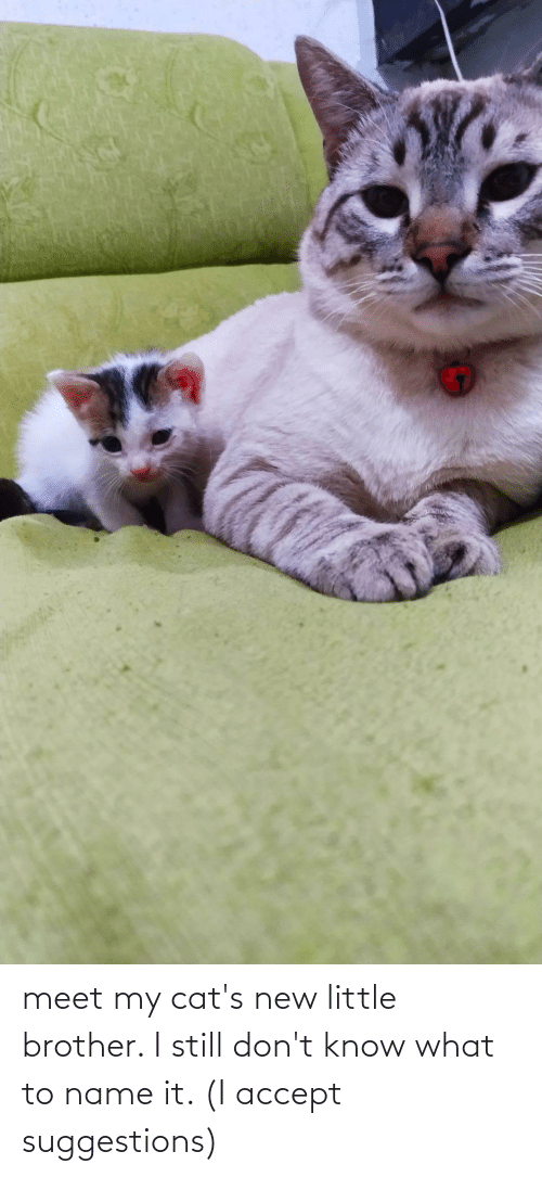 To Name: meet my cat's new little brother. I still don't know what to name it. (I accept suggestions)