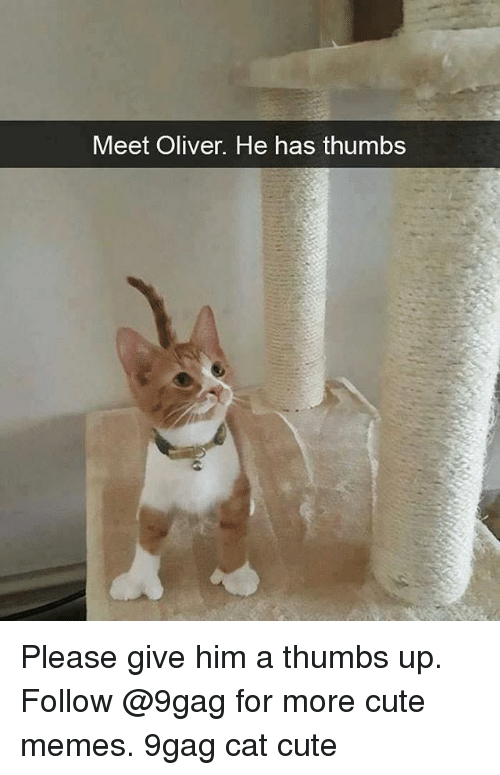 cute memes: Meet Oliver. He has thumbs Please give him a thumbs up. Follow @9gag for more cute memes. 9gag cat cute