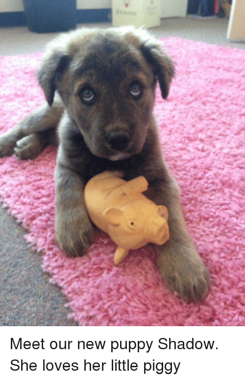 Puppy, Her, and Shadow: Meet our new puppy Shadow. She loves her little piggy