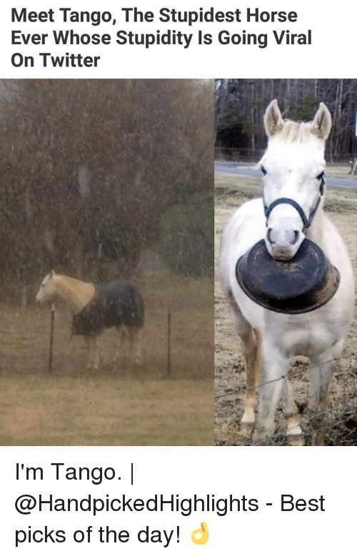 Memes, Twitter, and Best: Meet Tango, The Stupidest Horse  Ever Whose Stupidity Is Going Viral  On Twitter I'm Tango. | @HandpickedHighlights - Best picks of the day! 👌