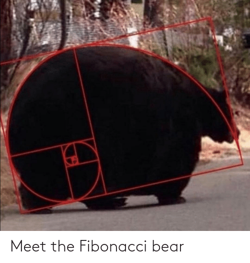 Meet The: Meet the Fibonacci bear