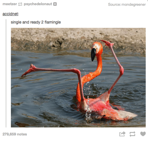 Humans of Tumblr, Single, and Source: meetzerpsychedelonaut+  Source:mondegreener  accidnet:  single and ready 2 flamingle  279,659 notes