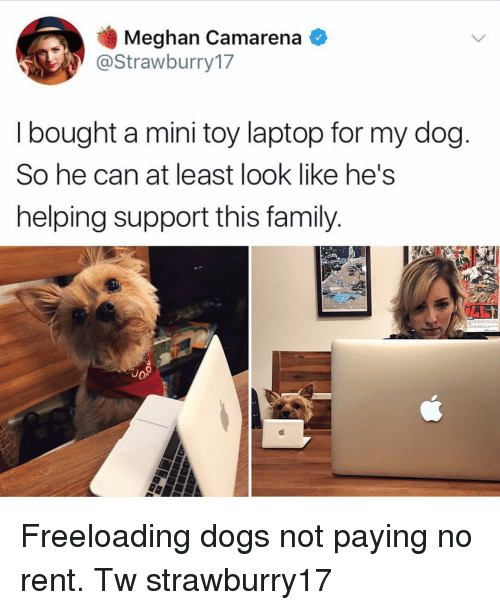 Dogs, Family, and Memes: Meghan Camarena  @Strawburry17  I bought a mini toy laptop for my dog  So he can at least look like he's  helping support this family.  18  о» Freeloading dogs not paying no rent. Tw strawburry17