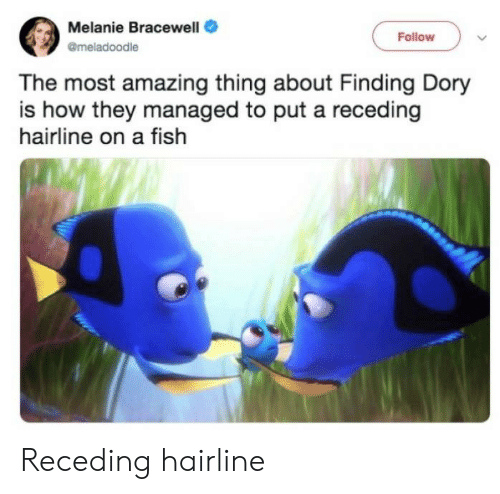 Hairline: Melanie Bracewell  Follow  @meladoodle  The most amazing thing about Finding Dory  is how they managed to put a receding  hairline on a fish Receding hairline