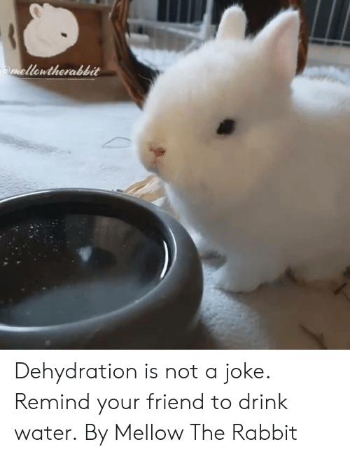 Dank, Rabbit, and Water: mellowtherabbit Dehydration is not a joke. Remind your friend to drink water.  By Mellow The Rabbit