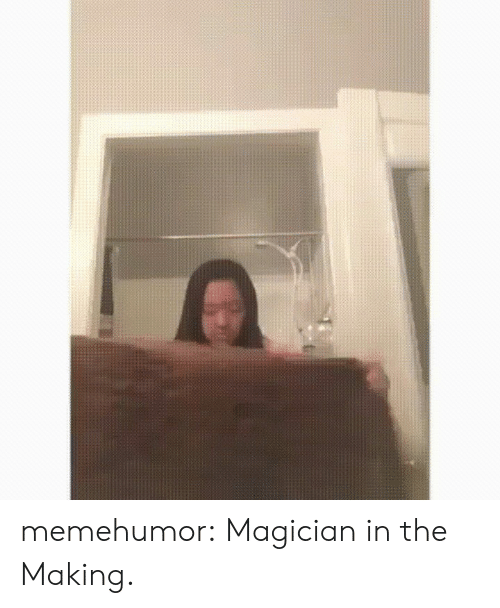 Tumblr, Blog, and Http: memehumor:  Magician in the Making.