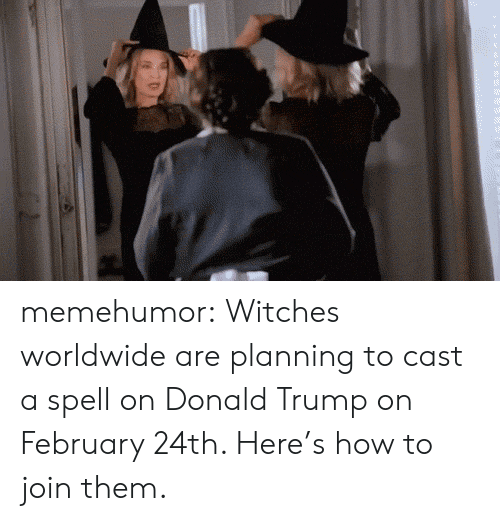 Donald Trump On: memehumor:  Witches worldwide are planning to cast a spell on Donald Trump on February 24th. Here's how to join them.