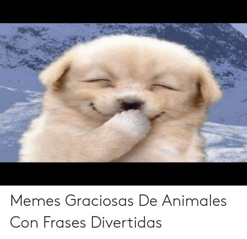 Memes Graciosas De Animales Con Frases Divertidas Meme On