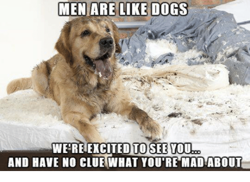 Dank, 🤖, and Madness: MEN ARE LIKE DOGS  WE REIEXCITED TO SEE YOU  AND HAVE NO CLUE WHAT YOU'RE MAD!ABOUT