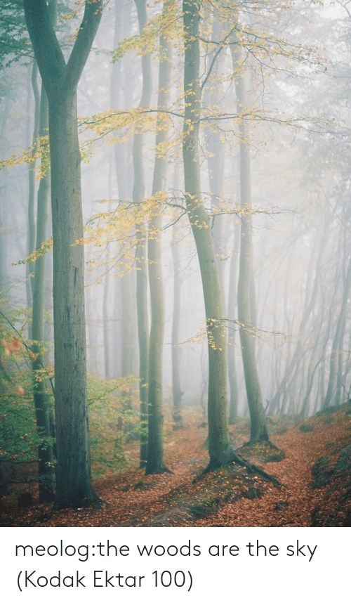 Tumblr, Blog, and Kodak: meolog:the woods are the sky (Kodak Ektar 100)
