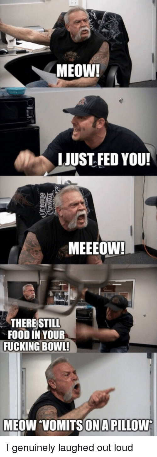Food, Fucking, and Bowl: MEOW!  LJUST FED YOU!  MEEEOW!  THERE STILL  FOOD IN YOUR  FUCKING BOWL!  MEOW VOMITSONA PILLOW I genuinely laughed out loud