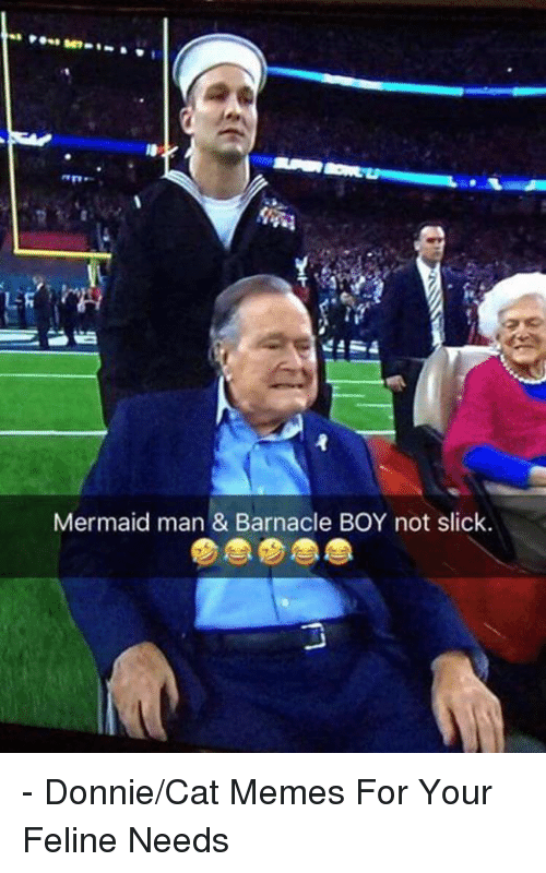 Memes, Slick, and Mermaids: Mermaid man & Barnacle BOY not slick. - Donnie/Cat Memes For Your Feline Needs