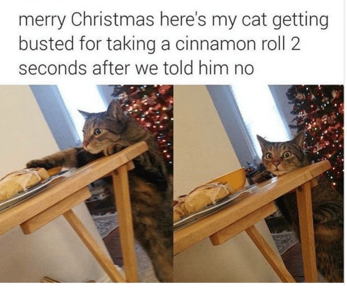 Christmas, Merry Christmas, and Cat: merry Christmas here's my cat getting  busted for taking a cinnamon roll 2  seconds after we told him no