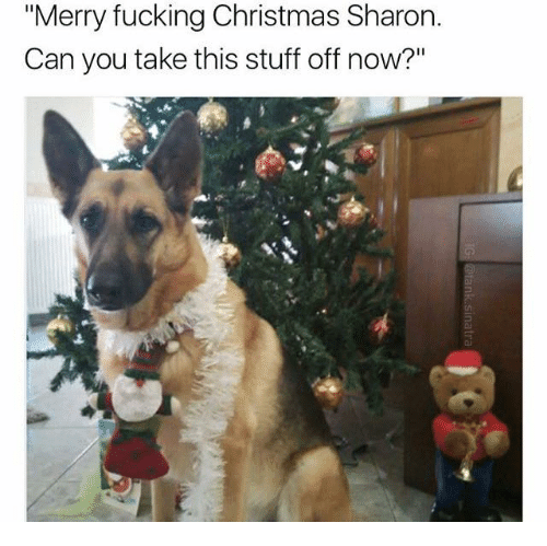 """Dank,  Sharone, and  Merry Fucking Christmas: """"Merry fucking Christmas Sharon.  Can you take this stuff off now?"""""""