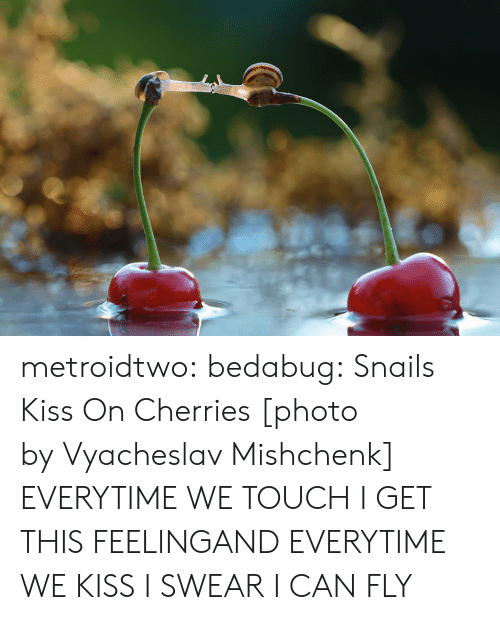 Cherries: metroidtwo:  bedabug:  Snails Kiss On Cherries [photo byVyacheslav Mishchenk]   EVERYTIME WE TOUCH I GET THIS FEELINGAND EVERYTIME WE KISS I SWEAR I CAN FLY