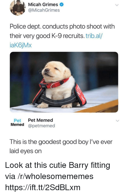 Memed: Micah Grimes  @MicahGrimes  Police dept. conducts photo shoot with  their very good K-9 recruits. trib.al/  aK6jMx  Pet Pet Memed  Memed @petmemed  This is the goodest good boy l've ever  laid eyes on Look at this cutie Barry fitting via /r/wholesomememes https://ift.tt/2SdBLxm