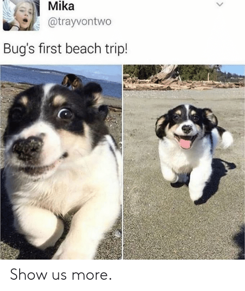 Dank, Beach, and 🤖: Mika  @trayvontwo  Bug's first beach trip! Show us more.