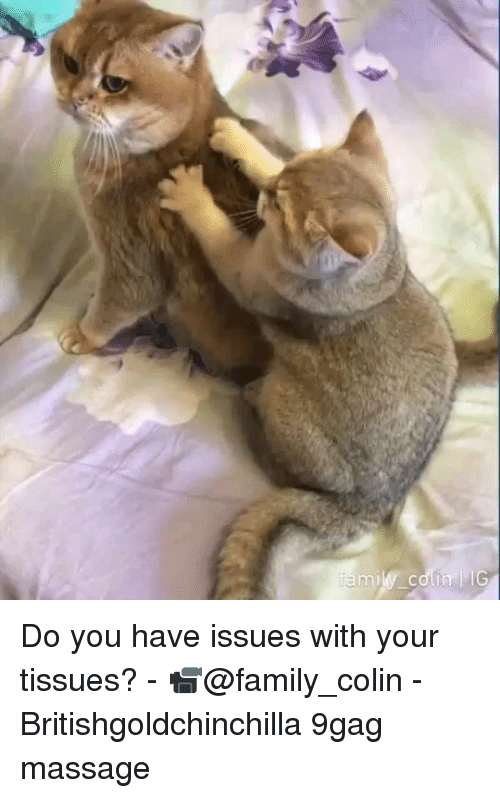 9gag, Family, and Massage: mily coli Do you have issues with your tissues? - 📹@family_colin - Britishgoldchinchilla 9gag massage