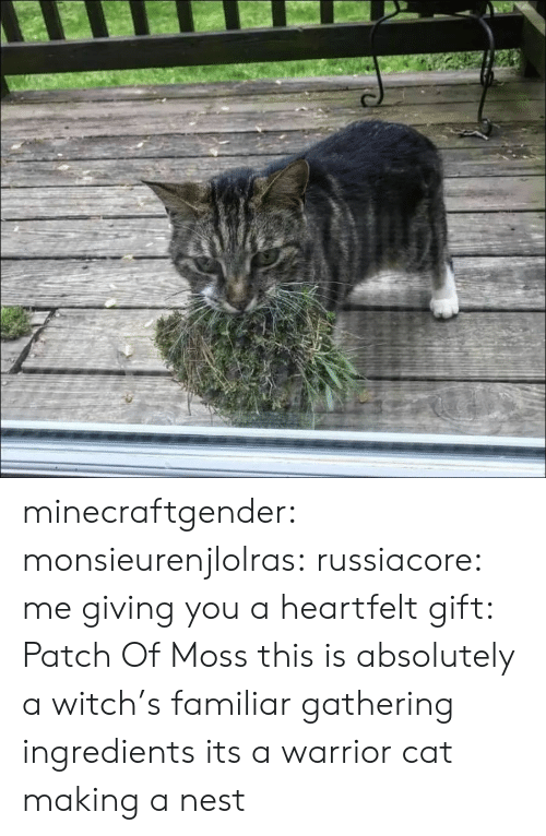 Tumblr, Blog, and Http: minecraftgender:  monsieurenjlolras:  russiacore: me giving you a heartfelt gift: Patch Of Moss  this is absolutely a witch's familiar gathering ingredients   its a warrior cat making a nest
