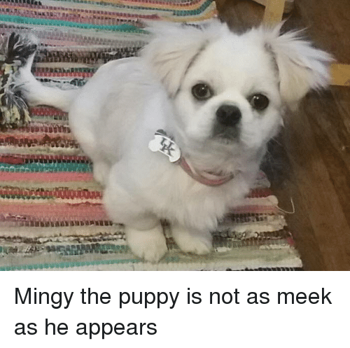 Puppy, Meek, and Not