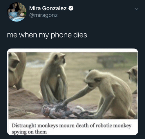 Phone, Death, and Monkey: Mira Gonzalez  @miragonz  me when my phone dies  Distraught monkeys mourn death of robotic monkey  spying on them