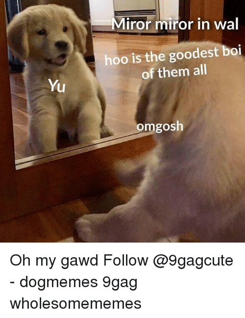 9gag, Memes, and 🤖: Miror miror in wal  hoo is the goodest boi  of them all  Yu  omgosh Oh my gawd Follow @9gagcute - dogmemes 9gag wholesomememes