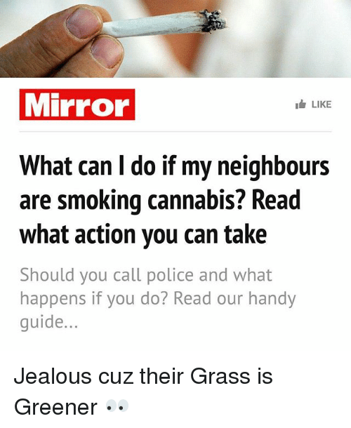 Jealous, Memes, and Police: Mirror  Ib LIKE  What can l do if my neighbours  are smoking cannabis? Read  what action you can take  Should you call police and what  happens if you do? Read our handy  guide Jealous cuz their Grass is Greener 👀
