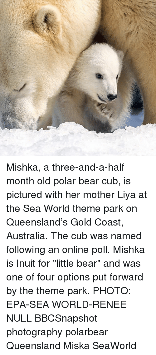 "epa: Mishka, a three-and-a-half month old polar bear cub, is pictured with her mother Liya at the Sea World theme park on Queensland's Gold Coast, Australia. The cub was named following an online poll. Mishka is Inuit for ""little bear"" and was one of four options put forward by the theme park. PHOTO: EPA-SEA WORLD-RENEE NULL BBCSnapshot photography polarbear Queensland Miska SeaWorld"