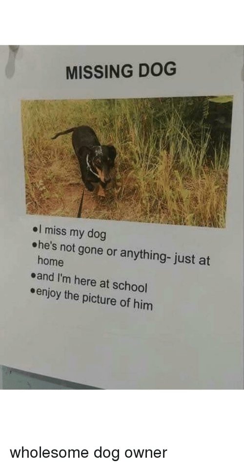 School, Home, and Wholesome: MISSING DOG  el miss my dog  ehe's not gone or anything- just at  home  eand I'm here at school  enjoy the picture of hinm wholesome dog owner