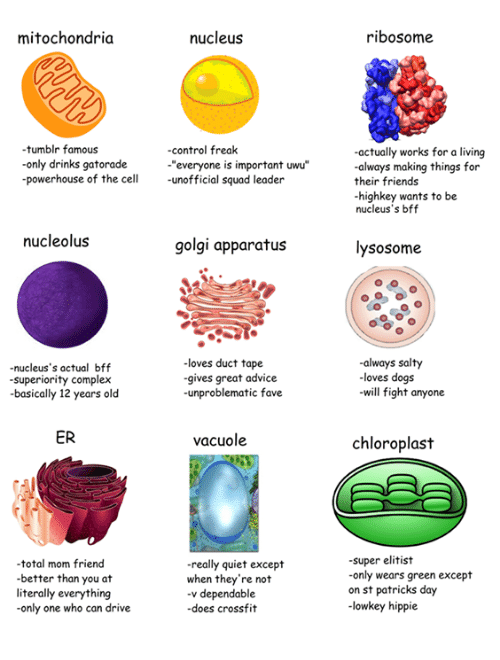 """Advice, Complex, and Dogs: mitochondria  nucleus  ribosome  tumblr famous  -only drinks gatorade  powerhouse of the cell unofficial squad leader  -control freak  """"everyone is important uwu""""  actually works for a living  always making things for  their friends  highkey wants to be  nucleus's bff  nucleolus  golgi apparatus  lysosome  -nucleus's actual bff  superiority complex  basically 12 years old  -loves duct tape  gives great advice  -unproblematic fave  always salty  -loves dogs  will fight anyone  ER  vacuole  chloroplast  total mom friend  better than you at  literally everything  only one who can drive  really quiet except  when they're not  -v dependable  -does crossfit  super elitist  only wears green except  on st patricks day  -lowkey hippie"""