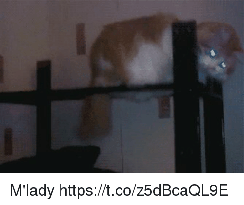 Mlady and Https: M'lady https://t.co/z5dBcaQL9E