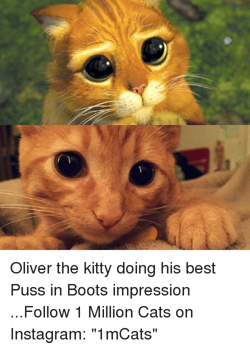 """Pussing: mm Oliver the kitty doing his best Puss in Boots impression    ...Follow 1 Million Cats on Instagram: """"1mCats"""""""