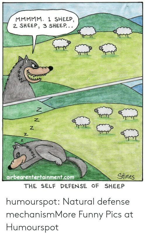 Funny, Tumblr, and Blog: MMMMM. 1 SHEEP,  2 SHEEP, 3 SHEEP  z.  airbearentertainment.com  Stines  THE SELF DEFENSE OF SHEEP humourspot:  Natural defense mechanismMore Funny Pics at Humourspot