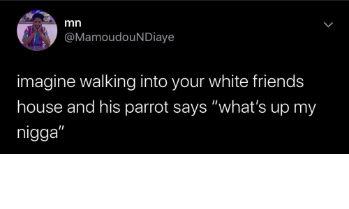 "White: mn  @MamoudouNDiaye  imagine walking into your white friends  house and his parrot says ""what's up my  nigga"""