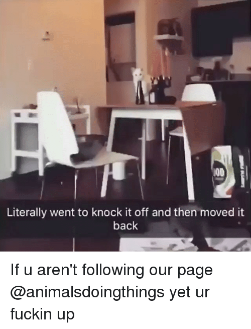 Dank Memes, Back, and Page: MOD  Literally went to knock it off and then moved it  back If u aren't following our page @animalsdoingthings yet ur fuckin up