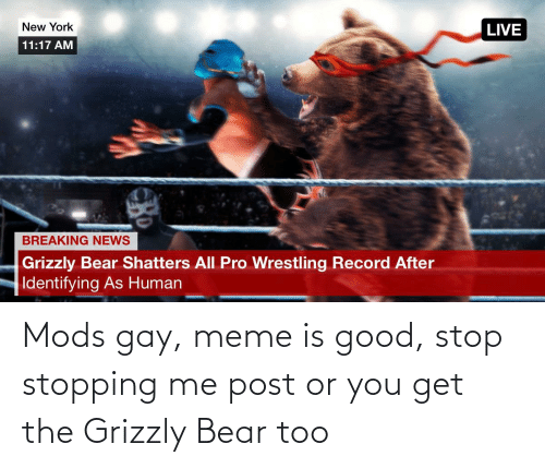 Gay Meme: Mods gay, meme is good, stop stopping me post or you get the Grizzly Bear too