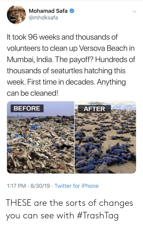 Iphone, Twitter, and Beach: Mohamad Safa  @mhdksafa  It took 96 weeks and thousands of  volunteers to clean up Versova Beach in  Mumbai, India. The payoff? Hundreds of  thousands of seaturtles hatching this  week. First time in decades. Anything  can be cleaned!  BEFORE  AFTER  1:17 PM 8/30/19 Twitter for iPhone THESE are the sorts of changes you can see with #TrashTag