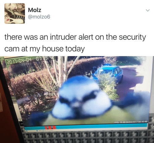 My House, House, and Today: Molz  @molzo6  there was an intruder alert on the security  cam at my house today