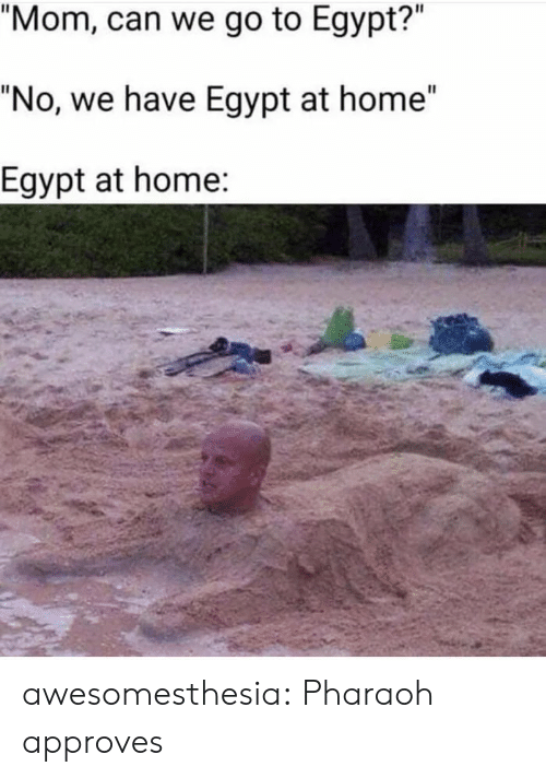 """Tumblr, Blog, and Home: """"Mom, can we go to Egypt?""""  """"No, we have Egypt at home""""  Egypt at home: awesomesthesia:  Pharaoh approves"""