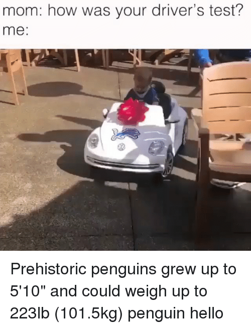 """Driver's Test: mom: how was your driver's test?  me: Prehistoric penguins grew up to 5'10"""" and could weigh up to 223lb (101.5kg) penguin hello"""