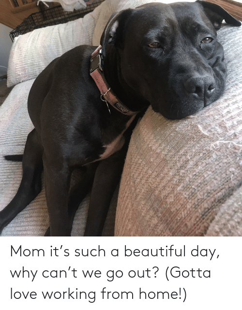 Gotta: Mom it's such a beautiful day, why can't we go out? (Gotta love working from home!)