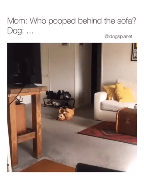 Mom, Dog, and Who: Mom: Who pooped behind the sofa?  Dog: ..  @idogsplanet