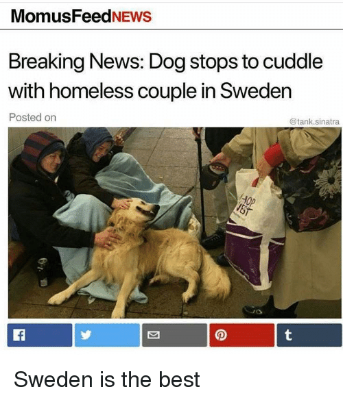 Homeless, News, and Best: MomusFeedNEws  Breaking News: Dog stops to cuddle  with homeless couple in Sweden  Posted on  @tank.sinatra <p>Sweden is the best</p>
