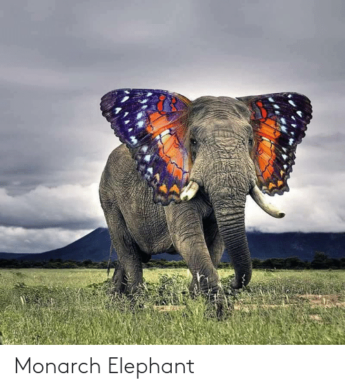 Elephant: Monarch Elephant