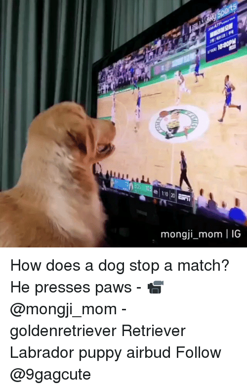 Memes, Match, and Puppy: mongji mom | IG How does a dog stop a match? He presses paws - 📹@mongji_mom - goldenretriever Retriever Labrador puppy airbud Follow @9gagcute
