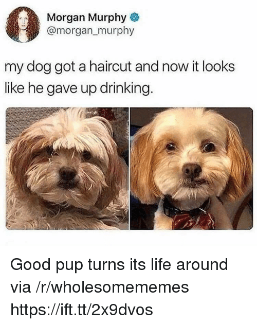 Drinking, Haircut, and Life: Morgan Murphy&  @morgan murphy  my dog got a haircut and now it looks  like he gave up drinking. Good pup turns its life around via /r/wholesomememes https://ift.tt/2x9dvos